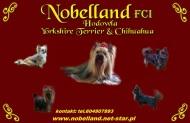 Nobelland